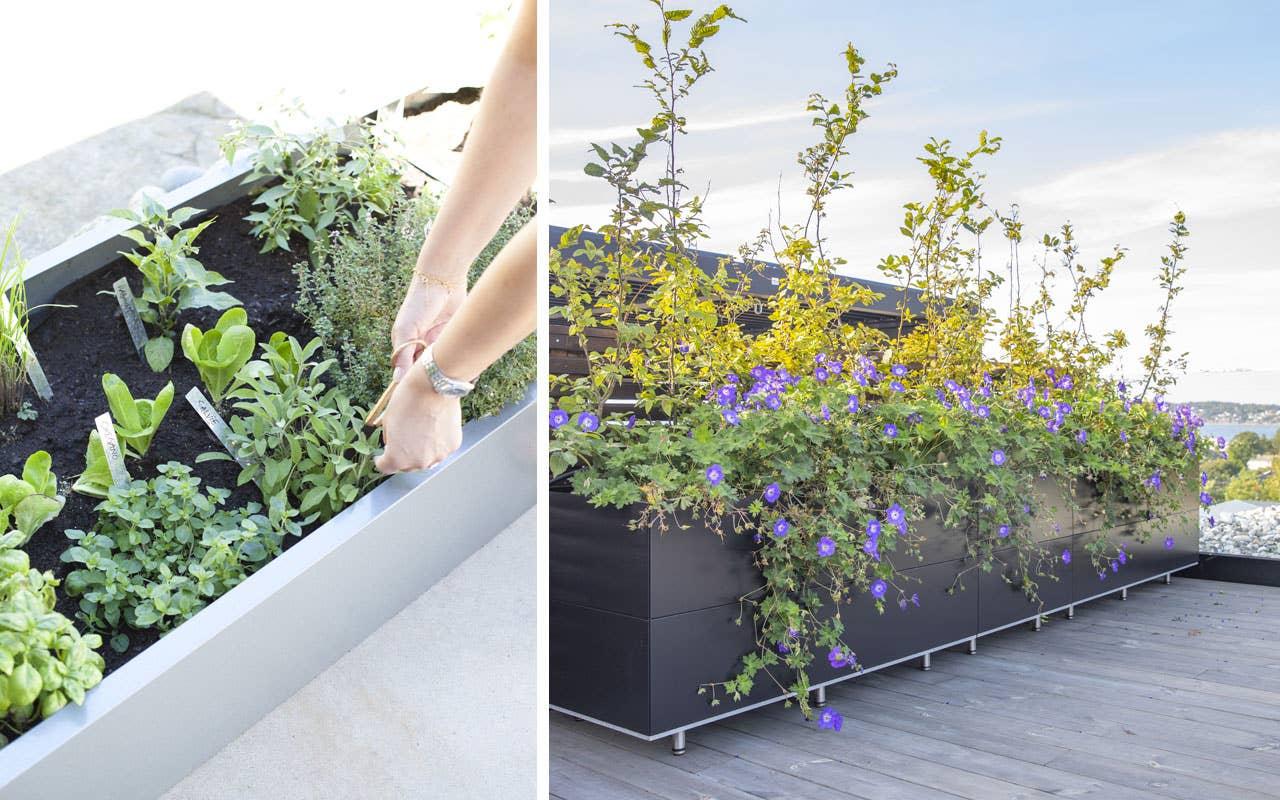 «Hage på hjul» med smarte plantekasser fra BEDD. De frostsikre og rustfrie plantekassene kan settes på hjul, bygges sammen eller brukes hver for seg. De er fine til å skape soner i hagen, og kan romme både en liten hekk, blomster, eller krydderurter.