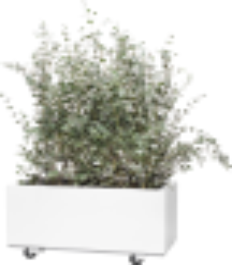 BEDD plantekasse 30x60 cm